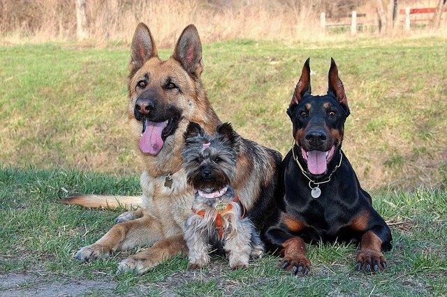 Dog Training - Joyce Moore Dog Training